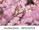 the japanese white eye.the... | Shutterstock . vector #585141916