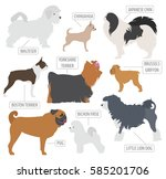 Stock vector miniature toy dog breeds collection isolated on white flat style vector illustration 585201706