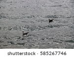 birds are floating in the sea | Shutterstock . vector #585267746