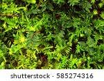 green nature   Shutterstock . vector #585274316