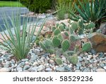 Outdoor Landscape With Cactus's.