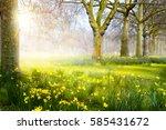 art spring flowers in the park  ...   Shutterstock . vector #585431672