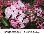 vivid  to pale pink mountain... | Shutterstock . vector #585465662