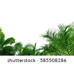 top view palm trees  beautiful... | Shutterstock . vector #585508286