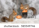 Close Up Of Red Squirrel On A...