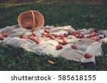 small wild apples in wicker...   Shutterstock . vector #585618155