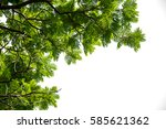 green leaves and branch ... | Shutterstock . vector #585621362