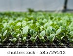 Organic Farming  Seedlings...