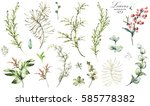 big set  elements   herbs  leaf ... | Shutterstock . vector #585778382