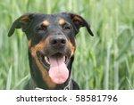a doberman dog sitting in the...
