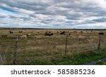 heard of cattle   Shutterstock . vector #585885236