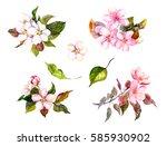 apple blossom  cherry flowers ... | Shutterstock . vector #585930902