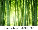 bamboo forest in japan. | Shutterstock . vector #586084232