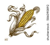 corn on the cob vintage... | Shutterstock .eps vector #586090892