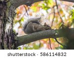 Squirrel On A Tree In Autumn