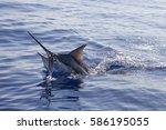 Head Shot Of Black Marlin On A...