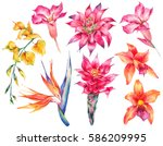 Stock photo watercolor set of vintage floral tropical natural elements exotic flowers botanical bright 586209995