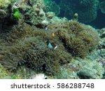 finding nemo thailand   Shutterstock . vector #586288748
