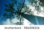 tree | Shutterstock . vector #586308326