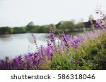 landscape vith lake and flowers ... | Shutterstock . vector #586318046