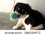 Stock photo cute puppy playing with a ball 586334972