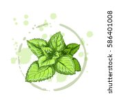 mint isolated on a white... | Shutterstock .eps vector #586401008