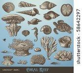 vector set  coral reef  ... | Shutterstock .eps vector #58642297