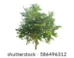 tree isolated on white... | Shutterstock . vector #586496312
