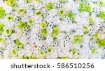 Stock photo beautiful white and green rose background 586510256