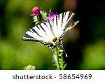 Swallowtail On Purple Lilies