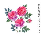 watercolor hand painted roses.... | Shutterstock . vector #586699592