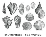 Seashell Collection  Engraving...