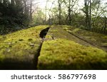 Small photo of Natural Alone Moss on the table that old in back of beyond