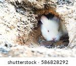 Beautiful White Baby Rabbit...