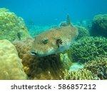 coral reef marine biology...   Shutterstock . vector #586857212