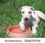 dog animal breed mammal... | Shutterstock . vector #586859936