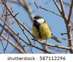 great tit  parus major  on a... | Shutterstock . vector #587112296