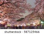 Tokyo Japan  April 5   Cherry...