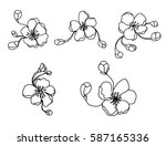 hand drawn peach blossom or... | Shutterstock .eps vector #587165336