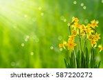Easter Flowers In Sunshine