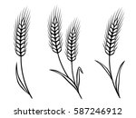 isolated black wheat ears on... | Shutterstock .eps vector #587246912