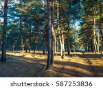 landscape with spring forest at ... | Shutterstock . vector #587253836