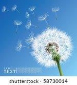 vector dandelion   Shutterstock .eps vector #58730014