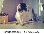 beauty cat playing on a table | Shutterstock . vector #587323622