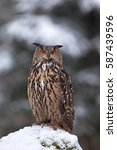 eurasian eagle owl  bubo bubo ... | Shutterstock . vector #587439596