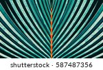 striped of palm leaf  abstract... | Shutterstock . vector #587487356