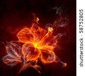 Fire Hibiscus Flower