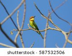 image of bird on the branch on...   Shutterstock . vector #587532506