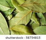 macro bay leaves for kitchen | Shutterstock . vector #58754815