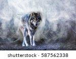 a wolf runs through the mist | Shutterstock . vector #587562338
